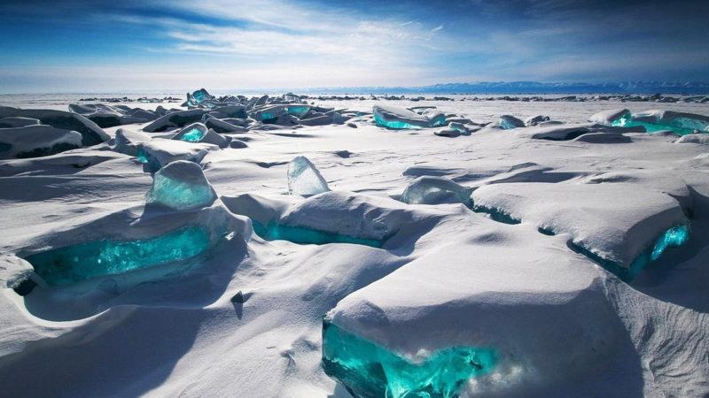 Chi sono i Bradipi in Antartide?